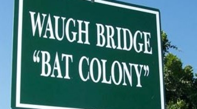 Waugh Street Bat Colony