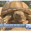 Heights Woman Walks Tortoise in Memorial Park